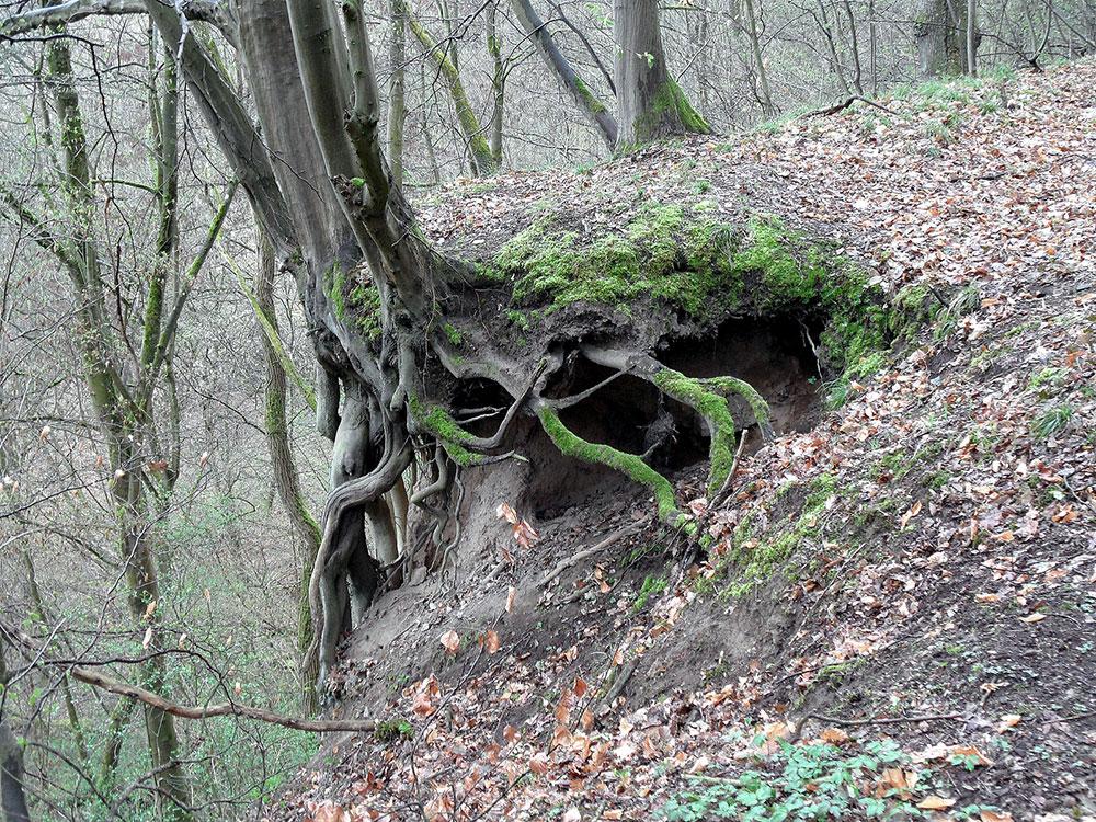 Baum-am-Abgrund
