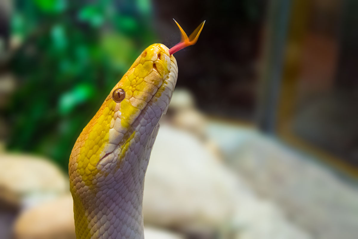 snake_wernerkleine